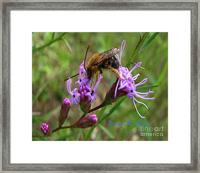 Framed Print featuring the photograph Lost Treasures  by Donna Brown