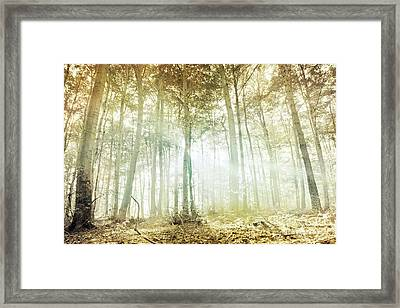 Lothlorien Framed Print by Violet Gray