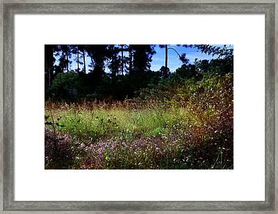 Framed Print featuring the photograph Lots Of Weeds by Joseph G Holland