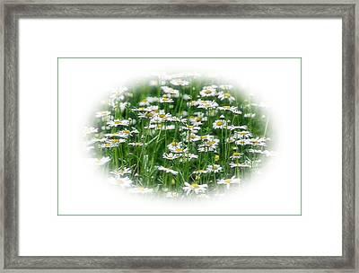 Lotsa Daisies Framed Print by Kristin Elmquist