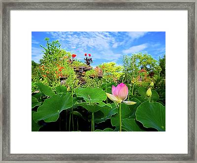Lotus Alchemy Framed Print by William Horden