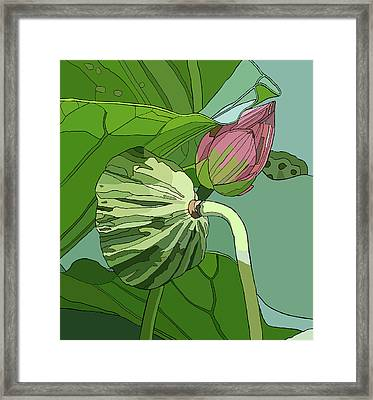 Lotus And Bud Framed Print