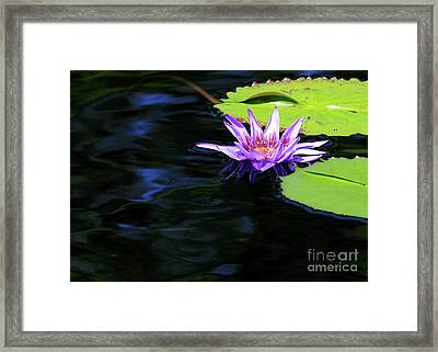 Lotus And Dark Water Refection Framed Print
