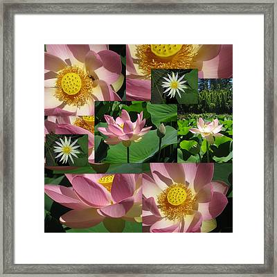 Lotus And Lily Art Framed Print by Cathy Jacobs