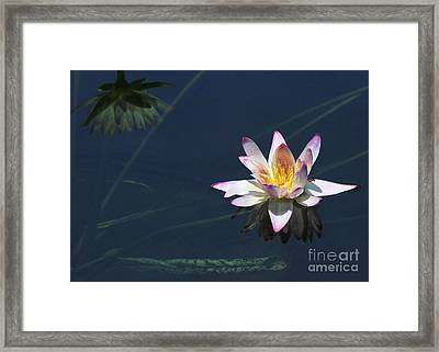 Lotus And Reflection Framed Print