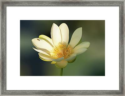 Framed Print featuring the photograph Lotus Beauty by Carolyn Dalessandro