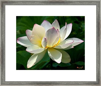 Lotus Beauty--disheveled Dl061 Framed Print