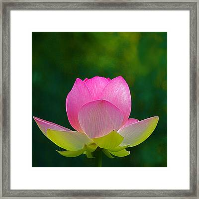 Framed Print featuring the photograph Lotus Blossom 842010 by Byron Varvarigos