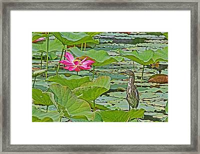 Lotus Blossom And Heron Framed Print