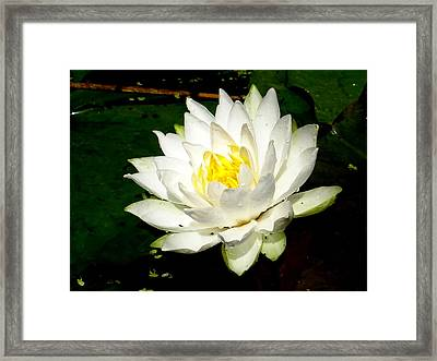 Lotus Blossom Framed Print by Bruce Ritchie