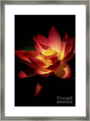 Lotus Blossom Framed Print by Paul W Faust -  Impressions of Light