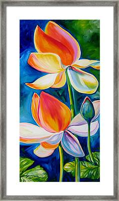 Lotus Blossoming Framed Print by Marcia Baldwin