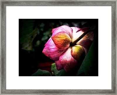 Framed Print featuring the digital art Lotus by Cameron Wood