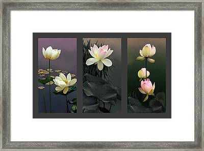 Lotus Collection II Framed Print by Jessica Jenney