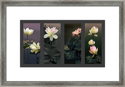Lotus Collection Framed Print by Jessica Jenney