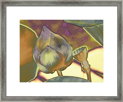 Lotus Dreaming 5 Framed Print
