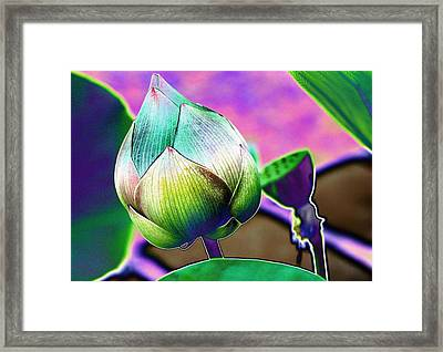 Lotus Dreaming 8 Framed Print