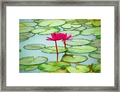 Lotus Flower On The Water 3 Framed Print by Lanjee Chee