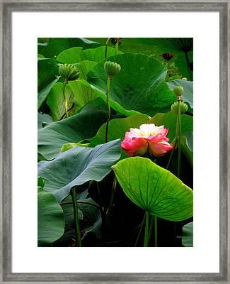 Lotus Forms Framed Print