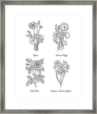 Lotus Iceland Poppy Red Rose Daffodils Drawing Framed Print