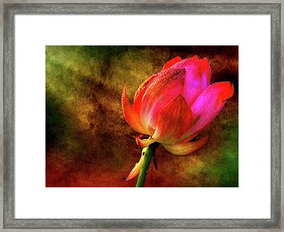 Lotus In Texture - A Present For A Friend Framed Print by Rohit Chawla