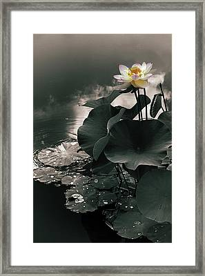 Lotus In The Mist Framed Print