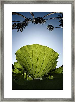 Framed Print featuring the photograph Lotus Leaf by Harry Spitz