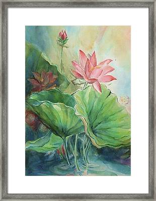 Lotus Of Hamakua Framed Print