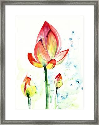 Lotus Opening Flower With Buds Framed Print by Tiberiu Soos