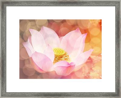 Lotus  Framed Print by Jacky Gerritsen