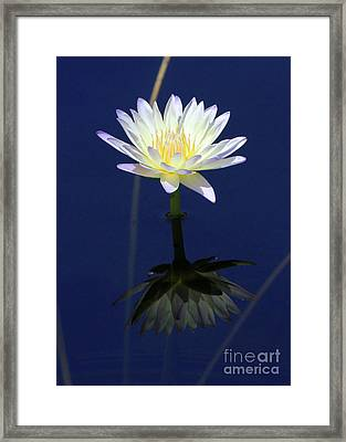 Lotus Reflection Framed Print