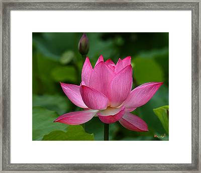 Lotus--shades Of Past And Future Dl029 Framed Print by Gerry Gantt