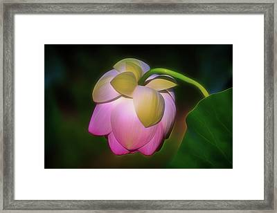 Framed Print featuring the photograph Lotus, Upside Down  by Cindy Lark Hartman