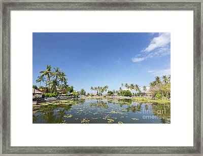 Lotus Water Lilies Growing In The Lagoon At Candidasa, Bali, Ind Framed Print by Roberto Morgenthaler