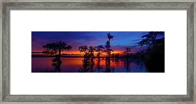 Louisiana Blue Salute Reprise Framed Print