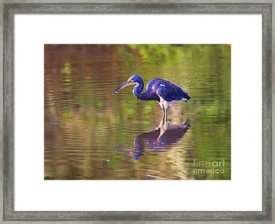 Louisiana Heron Framed Print by Marty Fancy