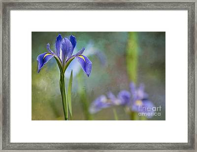 Framed Print featuring the photograph Louisiana Iris by Bonnie Barry