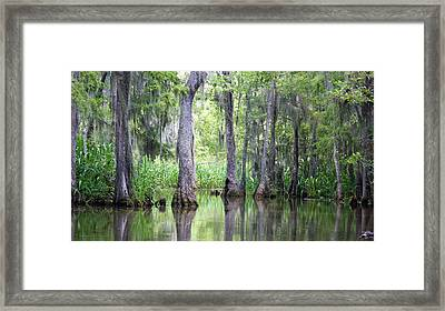 Louisiana Swamp 5 Framed Print