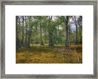 Louisiana Swamp Framed Print