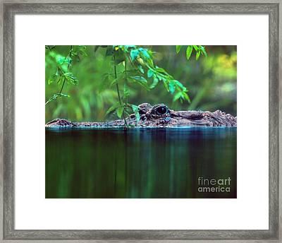 Louisiana Swimming Instructor  Framed Print by Ken Frischkorn