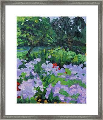 Louisiana Wild Phlox Framed Print by Barbara Jones