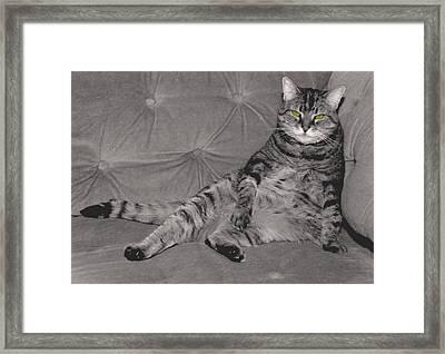 Lounge Cat Framed Print by Joy McKenzie
