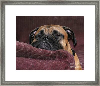 Lounging Around Framed Print
