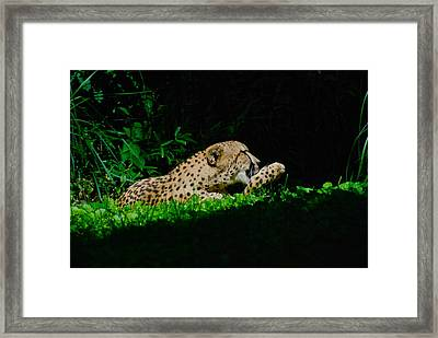 Lounging Cat Framed Print by Gene Sizemore