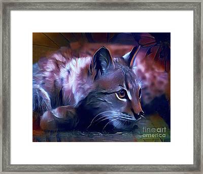 Lovable Feline Framed Print