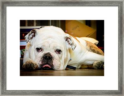 Lovable Indy Framed Print