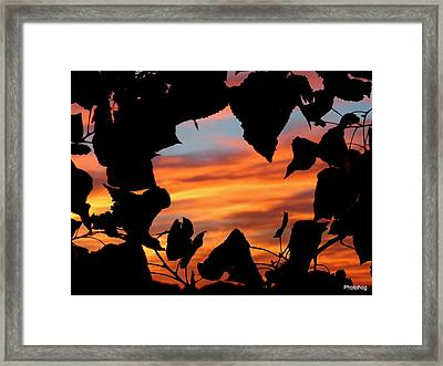 Love Framed Print by Adam Jones