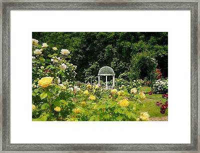 Love At First Sight Framed Print by Diana Angstadt