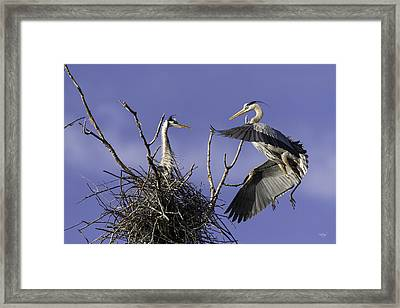 Love At First Sight Framed Print by Everet Regal