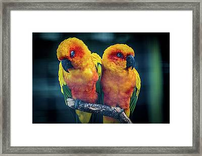 Framed Print featuring the photograph Love Birds by Chris Lord